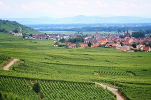 Best Vineyards in France